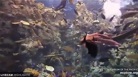 Tropical Reef Camera